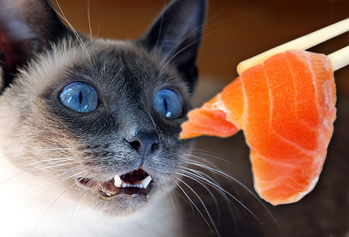 cat eating a piece of salmon,