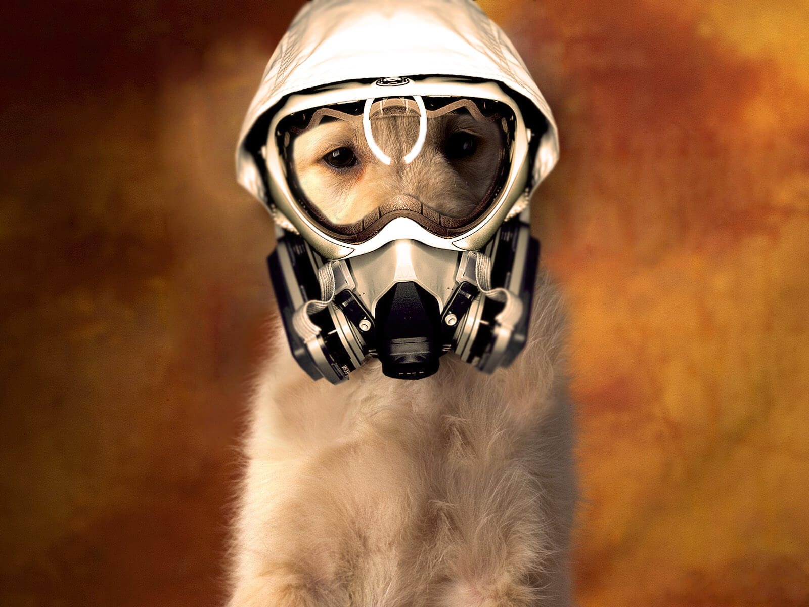 picture of a dog with bad breath in a gas mask!