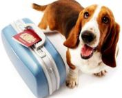 a picture of a dog with a suitcase