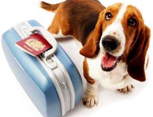 Travelling Abroad With Your Dog…