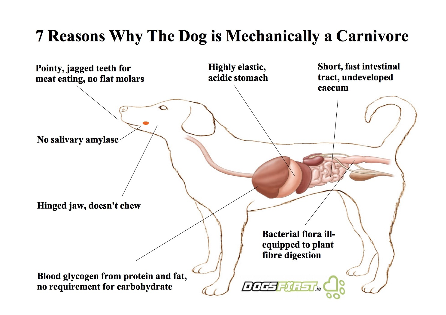 Dog nutrition dogs first a diagram showing 7 reasons why the dog is mechanically a carnivore pooptronica Gallery