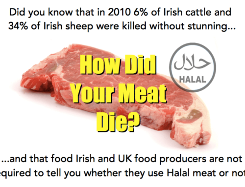 Do you Care how the Meat in Your dog Food Died?