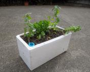 herb garden for dogs