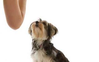 basics to dog training